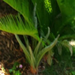 Today's Harvest ( Garland chrysanthemum -19 ) / [ Jun. 2020 ]
