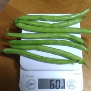 Today's Harvest ( Kidney beans without vine - 1 ) / [ Jun. 2020 ]