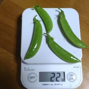 Today's Harvest (Sugar pea) [ Jun. 2020 ] - 60