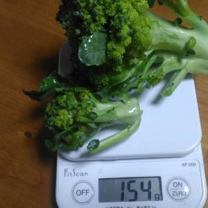 Today's Harvest ( Broccoli - 11 ) / [ Jun. 2020 ]