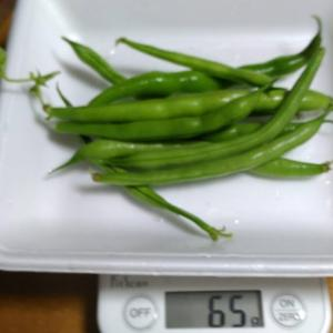 Today's Harvest ( Kidney beans without vine - 10 ) / [ Jul. 2020 ]