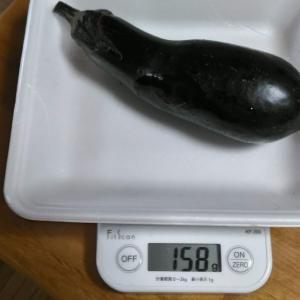 Today's Harvest ( Eggplant - 9 ) / [ Jul. 2020 ]