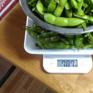 Today's Harvest ( Green soybean - 6 ) / [ Jul. 2020 ]