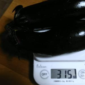 Today's Harvest ( Eggplant - 10 ) / [ Jul. 2020 ]
