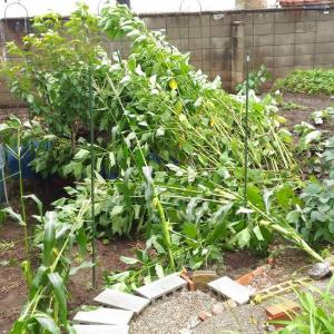 Strong Wind and Heavy Rain Damage - 3
