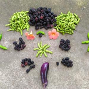 Today's Harvest [ Jul. 2020 ] - 8