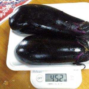 Today's Harvest ( Eggplant - 12 ) / [ Jul. 2020 ]