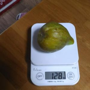 Today's Harvest ( Fig - 1 ) / [ Jul. 2020 ]