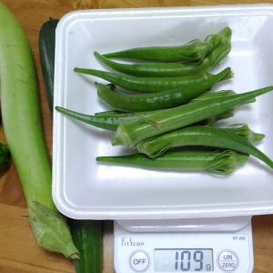 Today's Harvest ( the Okra - 51 ) / [ Sep. 2020 ]