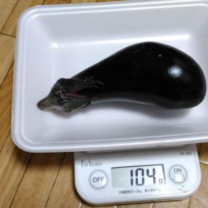 Today's Harvest ( Eggplant - 35 ) / [ Sep. 2020 ]
