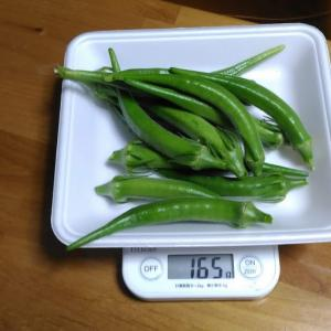 Today's Harvest ( the Okra - 56 ) / [ Sep. 2020 ]