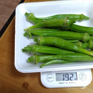 Today's Harvest ( the Okra - 72 ) / [ Oct. 2020 ]
