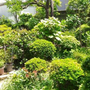 My Sister's garden ( May. 2021 )