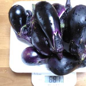 Today's Harvest ( Eggplant - 30 ) / [ Aug. 2021 ]