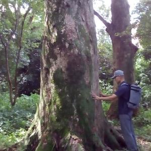 樹林気功のおかげで