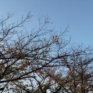 The falling leaves ~♪
