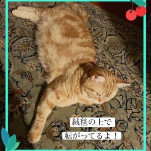 絨毯とシャンテ♡