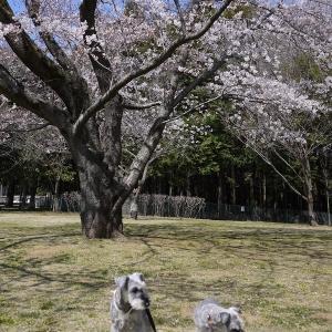 四月は花と。