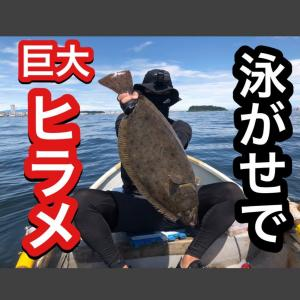 【ボート釣り】とりあえず泳がせろ!泳がせ釣りには夢がある!