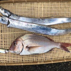 【大津港ボート釣り】一生に一度の釣り!in神奈川県横須賀市大津港石田丸