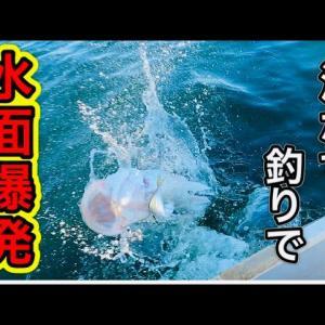 【手漕ぎボート釣り】2020年釣り納めも泳がせ釣りで水面爆発!神奈川県横須賀市大津港