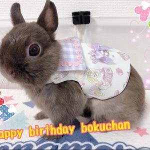 bokuchan お誕生日おめでとう(⌒∇⌒)