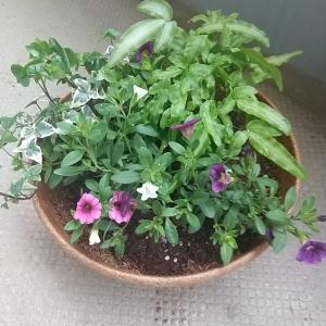 重曹でスッキリ…植物たち