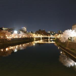 主計町(かぞえまち)浅野川の桜と勉強会の皆さまの着物姿