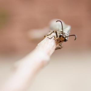 働かない2割のアリの存在意義