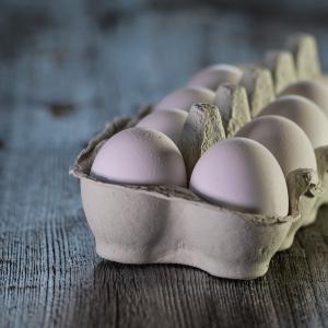 卵の運搬業務
