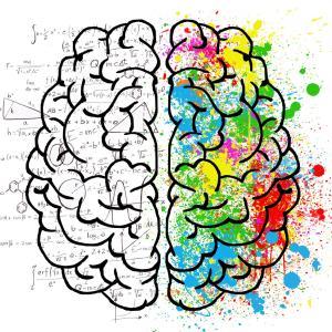 女性脳と男性脳の違い