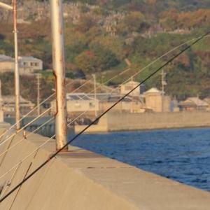 堤防から青物を狙う泳がせ釣りに使えるおすすめロッドを紹介!