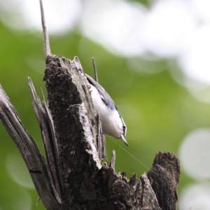 郊外公園の野鳥
