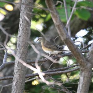 苫小牧で見た野鳥