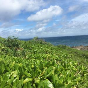 心のネガティブを洗い流そう~祖神アマミキヨの降りた霊地ハビャーン岬