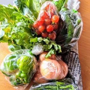 野菜  作り置き
