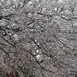 Thanksgiving mealと木が凍った日のち初冠雪