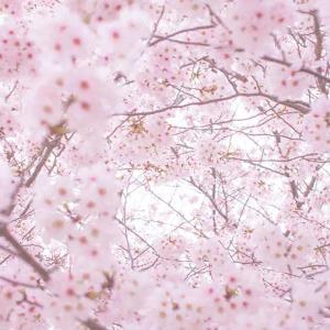 親父のポケgo日記 〔2019〕3月10日号(春めいてきました。そして明日は何の日?)