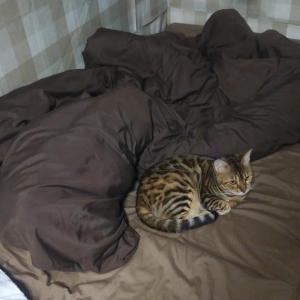 冬布団で寝るようになった