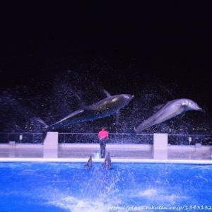 夜の水族館その3