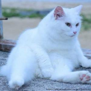 猫のお話 その4