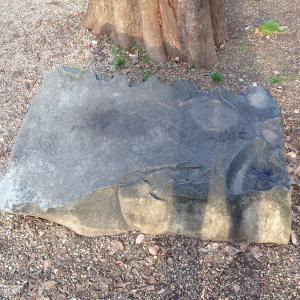 【特別編】鶴舞公園の謎の石