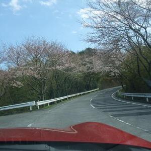 桜を楽しむ穴場スポットもみじろーど