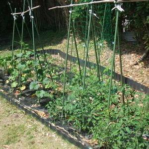今年の家庭菜園