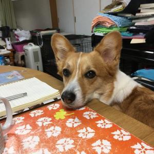 なんか忙しいパパ(2)