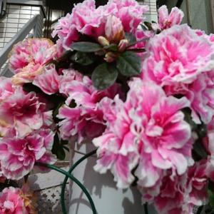 桃君家の冬の花