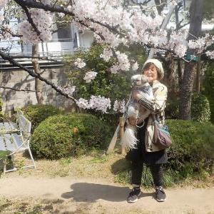 桃の今年の春の思い出は 桜祭り ダイエット挑戦(#^.^#)少しリバウンド・・・