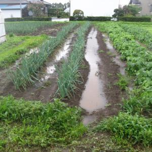 我が畑の大雨情報