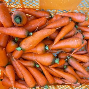 無農薬無化学肥料の野菜