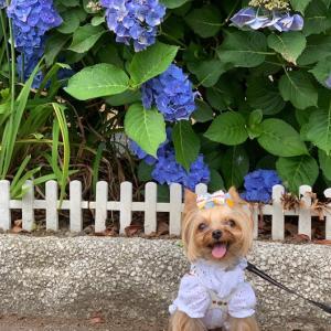 紫陽花が見たくて・・・